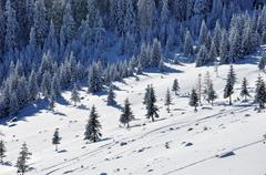 Snow-covered spruces in the mountains Stock Photos