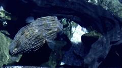 Globefish - stock footage