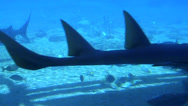Stock Video Footage of Sea World Aquarium, Gold Coast