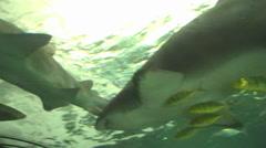 Underwater tunnel - stock footage