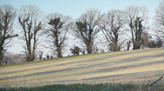 Frosty field and one-time hedgerow, Lasham, England, February. Stock Footage