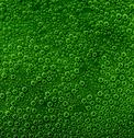 Stock Photo of green cellular air bubbles background
