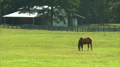 Horse Grazing Stock Footage
