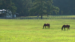 Horse Grazing Two Stock Footage