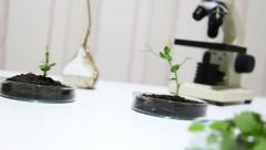 Stock Video Footage of Genetically modified plants test growing