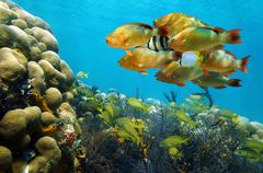 Shoal of colorful tropical fish in a coral reef Stock Photos