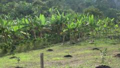 Crops, Farms, Farmland, Agriculture, Food Stock Footage