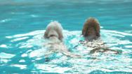 Stock Video Footage of Two Goldendoodles Swimming Away Side By Side Turn And Look Over Their Shoulders