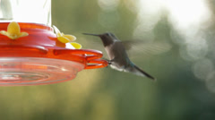 Two Hummingbirds At A Feeder Stock Footage
