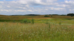 The meadow in the rural landscape on cloudy summer day Stock Footage