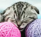 Stock Photo of kitten sleeps on the tangles of yarn