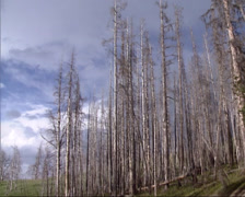 Burnt trees, fire damage on mountain slope Stock Footage
