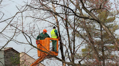 Tree pruning from a cherry picker Stock Footage