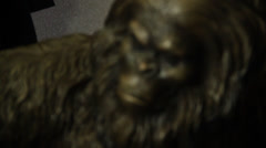 Slowly moves the camera in front of gorilla doll sasquatch big foot bigfoot Stock Footage