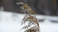 Winter Wind Rustles The Dry Grass 3 Stock Footage