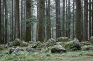 Stock Photo of mysterious forest