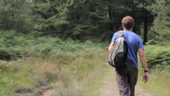 Man Walking in the Wyre Forest, Worcestershire, England, UK Stock Footage