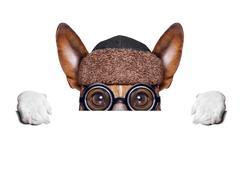 dumb crazy dog - stock illustration