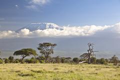 Kilimanjaro lumi cap Kuvituskuvat