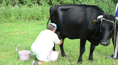 Milker woman milking milk from cow dug to plastic bucket Stock Footage