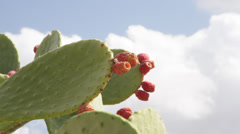 Prickly pear cactus opuntia fruit edible Stock Footage