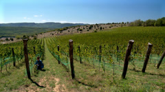 Agronomist is examining the grapes at the vineyard. - stock footage