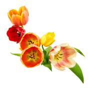 tulips border - stock photo