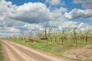 Stock Photo of agriculture, plum orchard