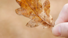 Oak leaf in hand Stock Footage