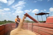 Stock Photo of agriculture, wheat harvesting