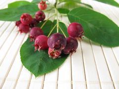 Juneberries Stock Photos