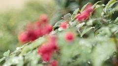 rack focus to frozen red berries - stock footage