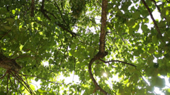 Branches of trees in the countryside on sunny summer day, close-up, sun rays Stock Footage
