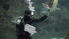 Diver turtle cleaning aquarium fish tank Stock Footage