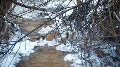 Creek, the thaw began Stock Footage