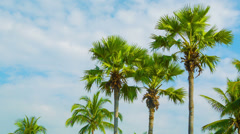 Tropical palm trees on sky background - stock footage
