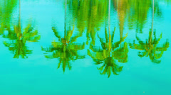Coconut palms reflection in a pond Stock Footage