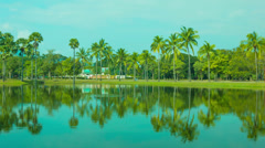 Reflection of coconut palm trees in decorative pond Stock Footage