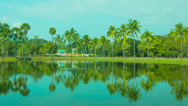 Stock Video Footage of reflection of coconut palm trees in decorative pond