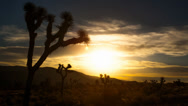 Stock Video Footage of Super Moon Rises over Joshua Tree Timelapse