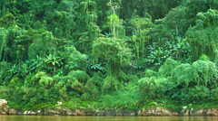 Stock Video Footage of jungle on the banks of the mekong river. laos