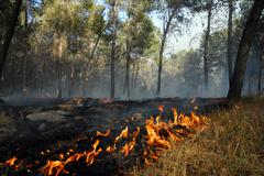 Large wildfire Stock Photos