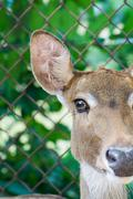 Close up portrait of an antelope Stock Photos