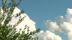 Close up of olive's tree tip in a cloudscape background. Stock Footage