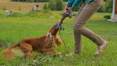 Girl spending a free time with dog, playing with a toy in the garden Stock Footage