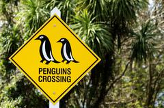 penguins crossing - stock photo
