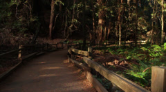 Muir woods national park Stock Footage