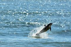Dolphin jump out of the water Stock Photos