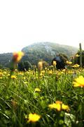 Flowers landscape Stock Photos