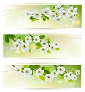 Three banners with blossoming tree branches. vector illustration Stock Illustration